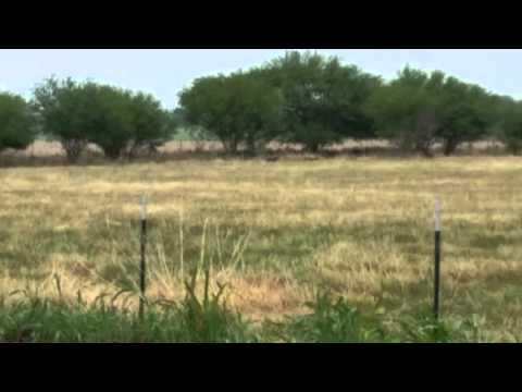 Chuppacabra in Thomaston, TX.