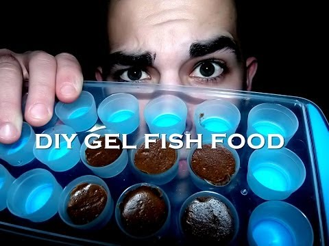 HOW TO: Make DIY Gel Fish Food