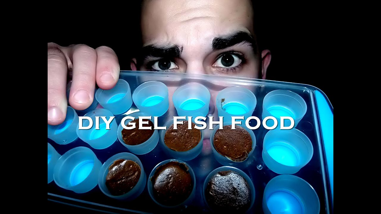 food design att x feeder fish dsc for aquarium automatic