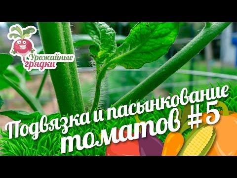 Как пасынковать помидоры: технология, особенности для