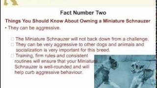 5 Things You Should Know About Owning A Miniature Schnauzer