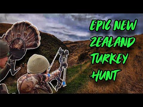 Epic New Zealand Turkey Bow Hunting!   Bowmar Bowhunting  