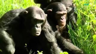 Sào huyệt của loài King Kong - Thiên nhiên hoang dã full HD Thuyết minh