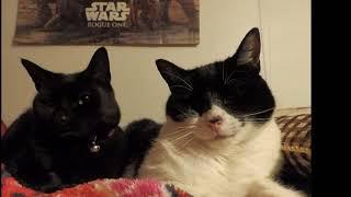 Calendar Of Cats - Decmeber 2017