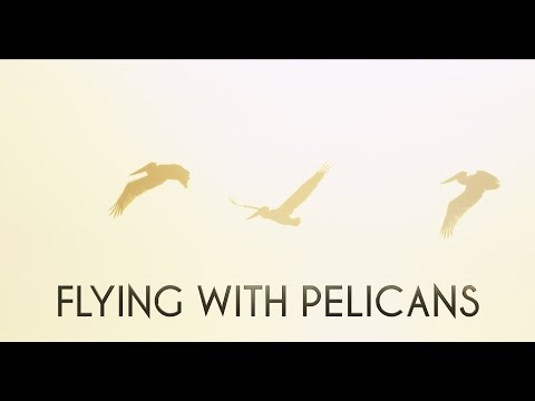 Flying With Pelicans