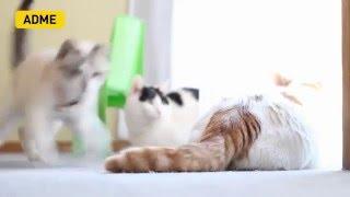 Хвост виляет котом [Лучшие видео ADME]