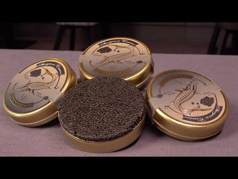 Fish Invest Black Caviar Corporate Video