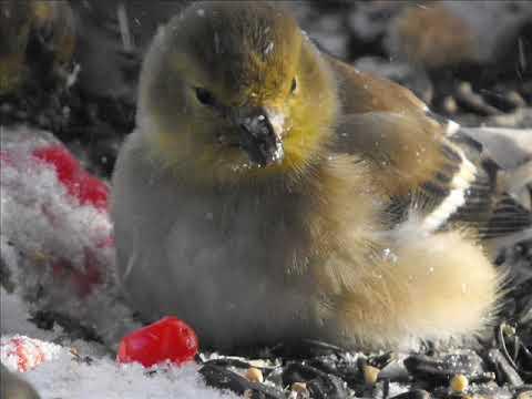 un plateau de bois pour attirer les oiseaux youtube. Black Bedroom Furniture Sets. Home Design Ideas