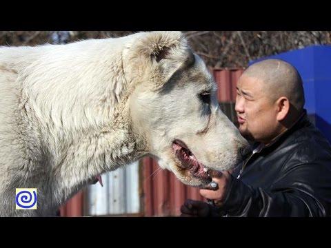 Top 10 Loài Chó Khỏe Nhất Thế Giới - World