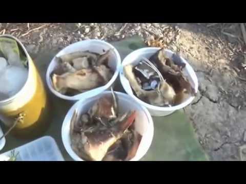 Рыбалка в Калмыкии - река Кума.