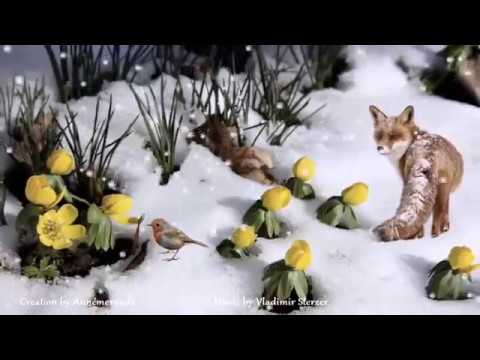 Winter Flowers in The Snow