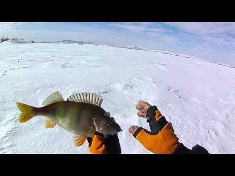 клев рыбы в новоуральске