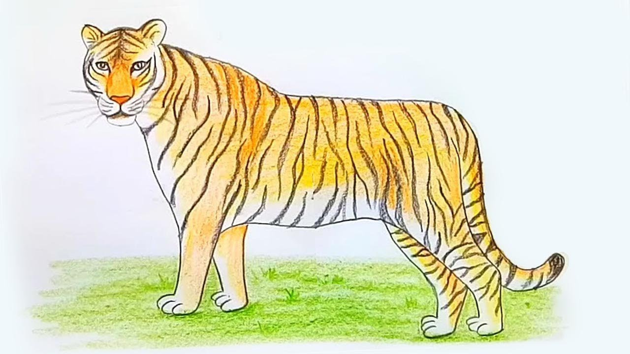 how to draw a tiger step by step [ 1280 x 720 Pixel ]