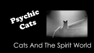 Cats and the Spirit World