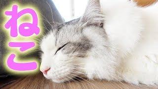 【猫】ほんとに知ってる?東京猫医療センター院長に聞くネコの基本!【服部幸 院長】