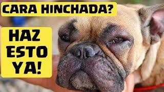 Hinchadas cara benadryl perros para