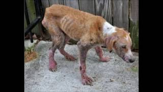 Про бездомных животных - ролик до слёз