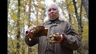 видео Где искать грибы: советы грибникам-любителям