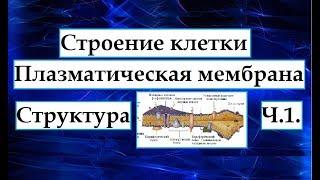 Цитология. Плазматическая мембрана. Ч.1. Структура мембран.
