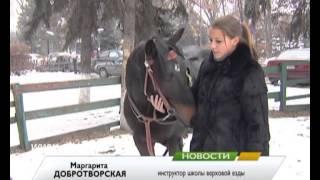 Триста тысяч - за коня
