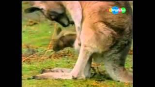 Забавные животные - Как рождаются животные