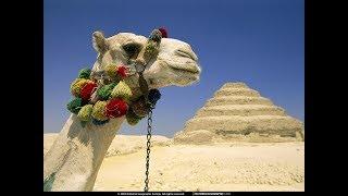 Интересных фактов о верблюдах