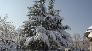 الثلوج تغطي لبنان