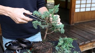 How to create a Bonsai tree (DIY)
