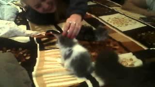 Отдаем котят нижний новгород