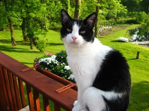 Types Of Cats That Are Black And White