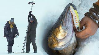 Трофейный СУДАК в ТОРОСАХ на РЫБИНСКОМ водохранилище Андрей Чуланов и Дмитрий Зюзин Зимняя рыбалка