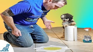 Puppy Potty Training  How To Stop Your Puppy From Peeing Indoors  Professional Dog Training Tips