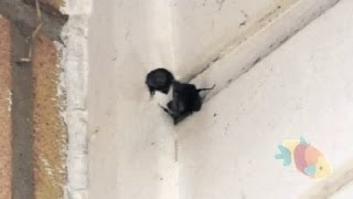 bumble bees nesting in our house