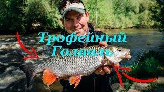 видео Ловля язя на спиннинг » Сайт о рыбалке для начинающих