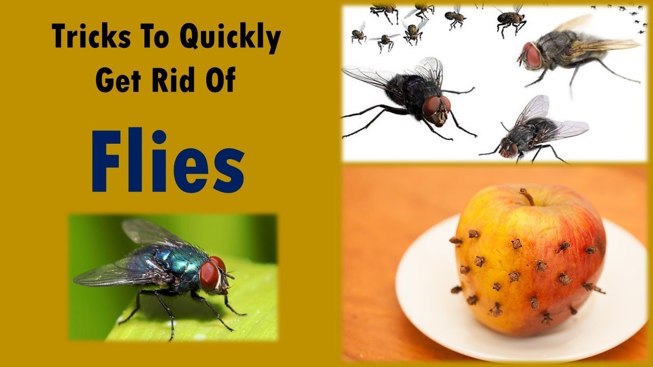 How To Get Rid Of Horse Flies Naturally