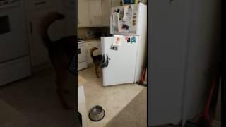 Good boy brings beer from fridge