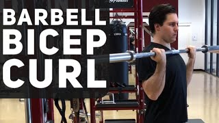 Barbell Bicep Curl Exercise