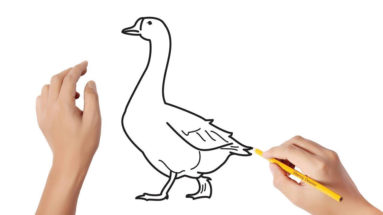 Comment Dessiner Une Oie Youtube