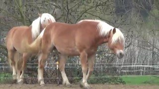 Horses, attraction force!