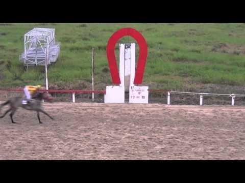 9º Páreo – Clássico Criação Depiguá – 1.200 metros: 1º Eh Uchoa – W.Gomes