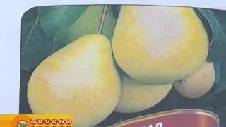 видео Купить саженцы плодовых деревьев из питомника для Подмосковья и Москвы, плодово-ягодные саженцы