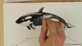 How to draw a WHALE - Orca | Blue Whale | Sperm Whale [DIY Aquarell - Watercolor]