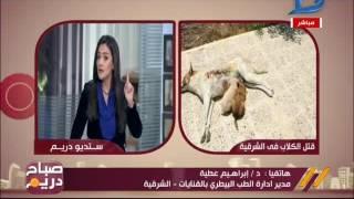 فيديو.. «بيطري الشرقية»: نضرب الكلاب الضالة بالخرطوش بعلم المحافظة