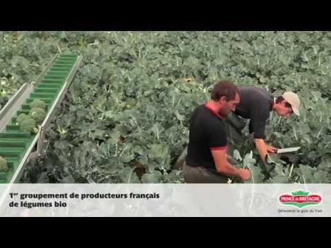 Prince de Bretagne, 1er groupement de producteurs français de légumes bio