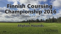 Finnish Lure Coursing Championship 2016 • Afghan Hounds