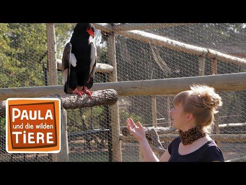 Adler Geier Co Doku Reportage Fur Kinder Paula Und Die Wilden Tiere Youtube