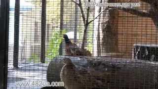 животные пицы харьковского зоопарка, куропатка и