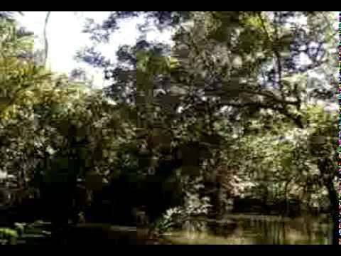 Expedição à Selva Amazônica (Brazil)