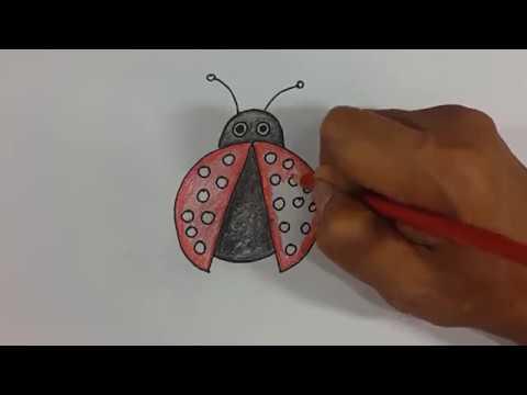 Cara Menggambar Dan Mewarnai Kepik Dengan Mudah Menggunakan Pensil
