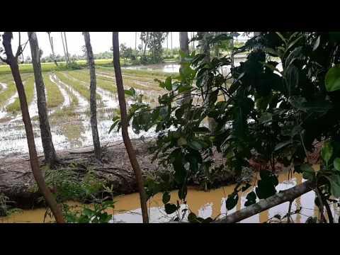 Farms Field Trip Farm Tour in Cambodia
